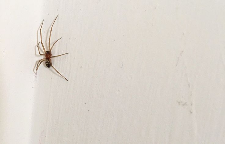How to get spiders to move out of your home