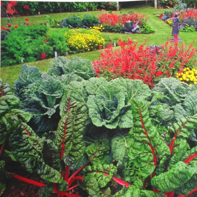 18 Edible Garden Designs Ideas: 17 Best Images About GARDENING: EDIBLE LANDSCAPING On