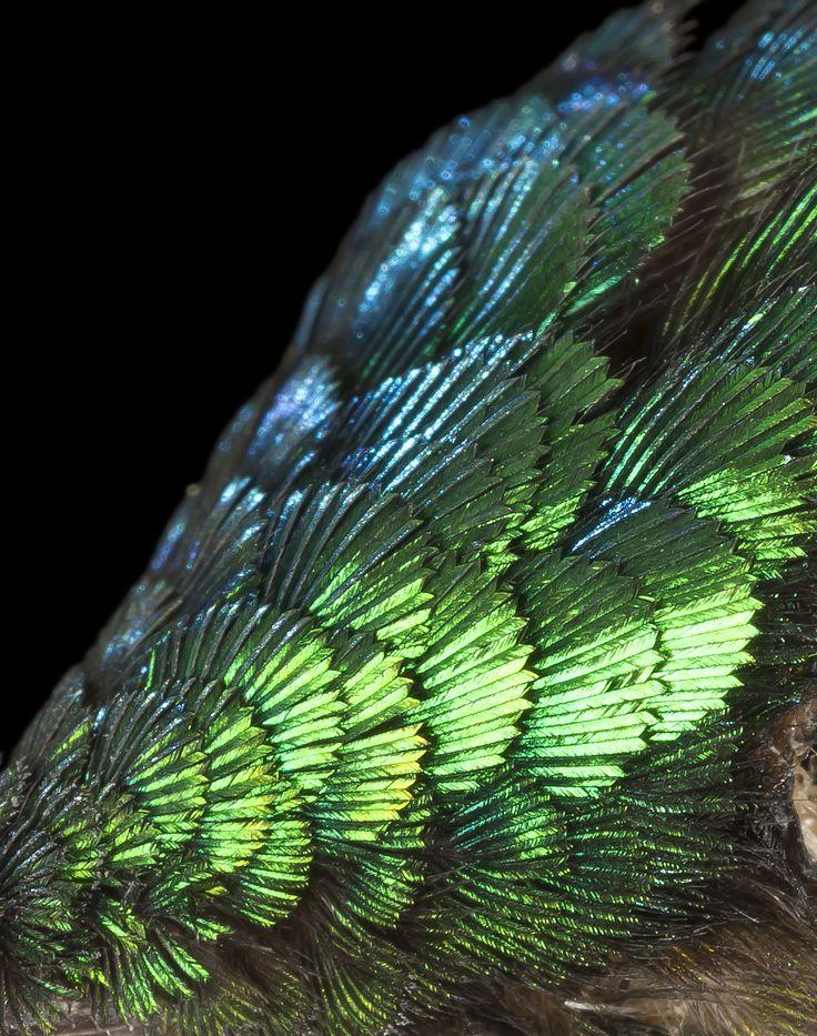 Best Hummingbird Ink Images On Pinterest Geometric Bird - Photographer captures amazing close up photos of hummingbirds iridescent feathers