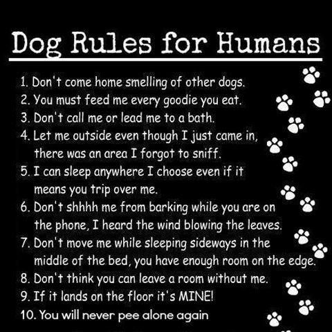 Dog rules for humans. Pretty spot on!
