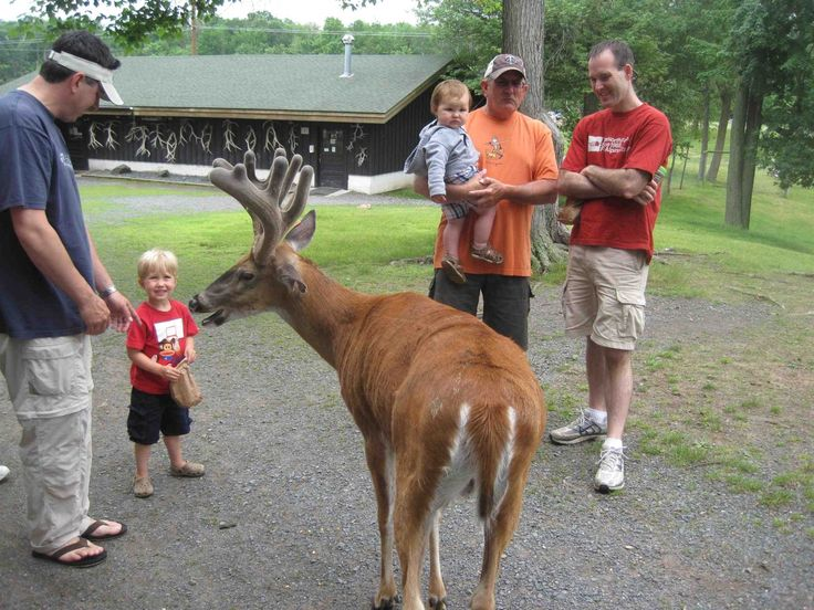 Feed the Animals at Fawn-Doe-Rosa Educational Wildlife Park, Wisc.