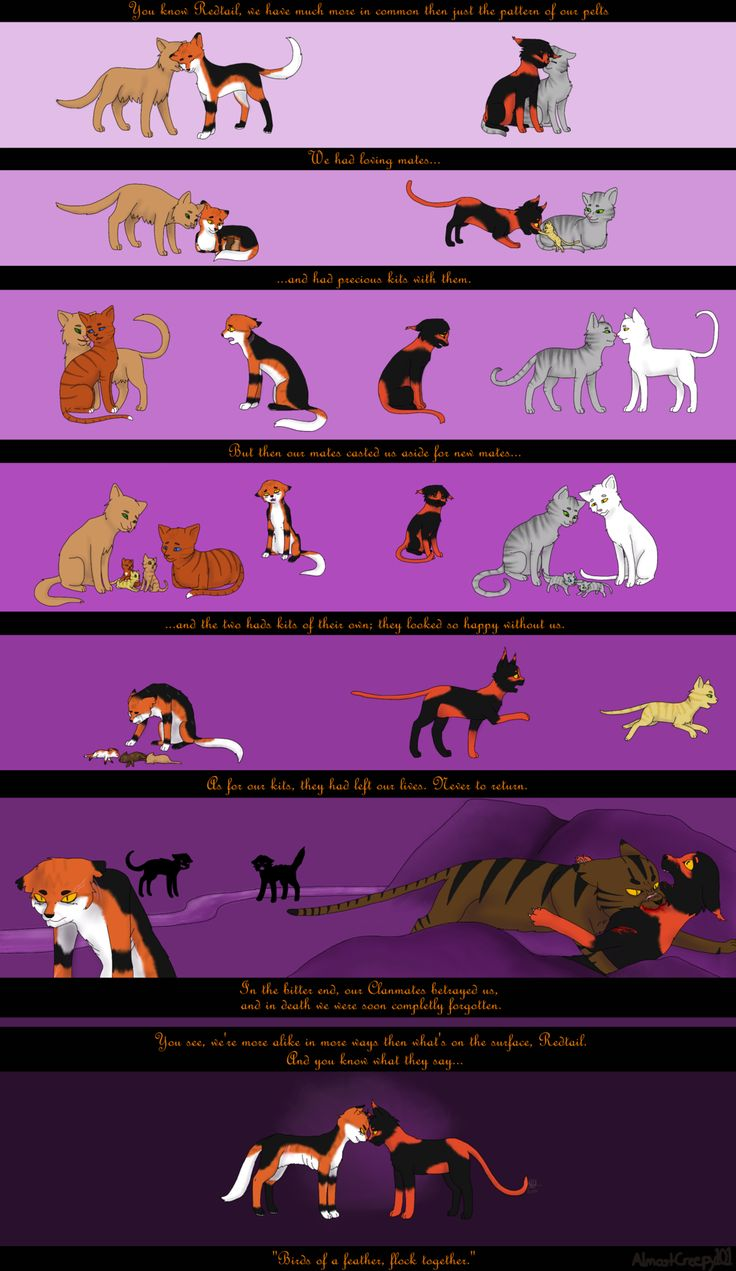 Yes... This is a ship I approve. Not Mapleshade and Tigerstar! Mapleshade and Redtail.