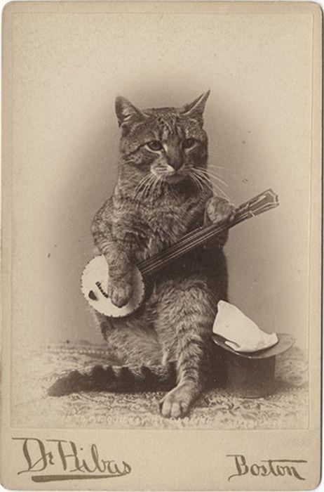 Banjo playing kitty.