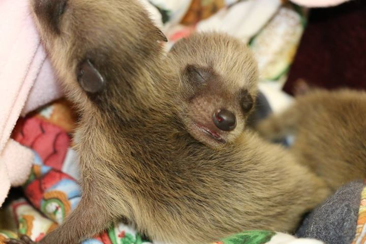 17 Adorable, Teeny-Tiny Animals Who Were Rescued This Spring