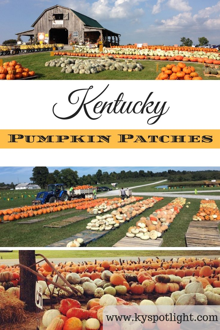 Our Round Up Of Kentucky S Best Pumpkin Patches Apple Orchards And Down Home Fall Fun Best Pumpkin Patches Kentucky Pumpkin Patch