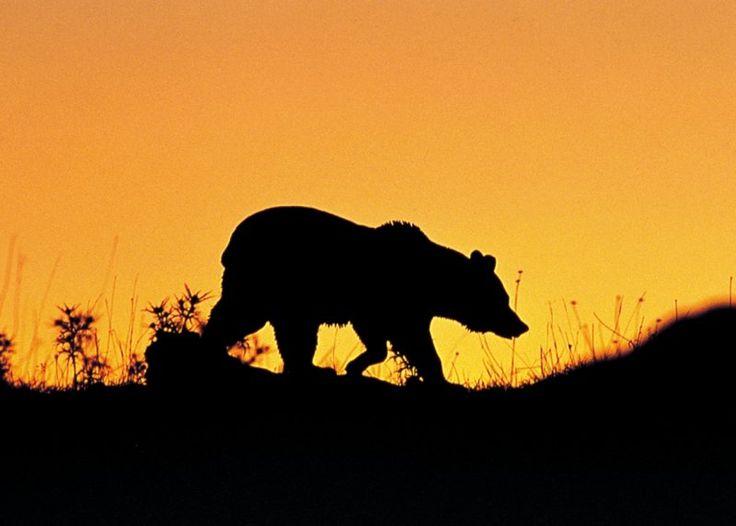 Weekend di Bearwatching ed astronomia su www.degustiblog.it