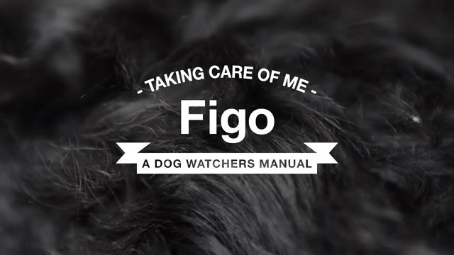 A dog watchers manual to Figo #PortugueseWaterDog #Dog