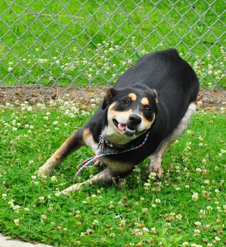Adopt Roxy Adopted On Dogs Stop Animal Cruelty Animals