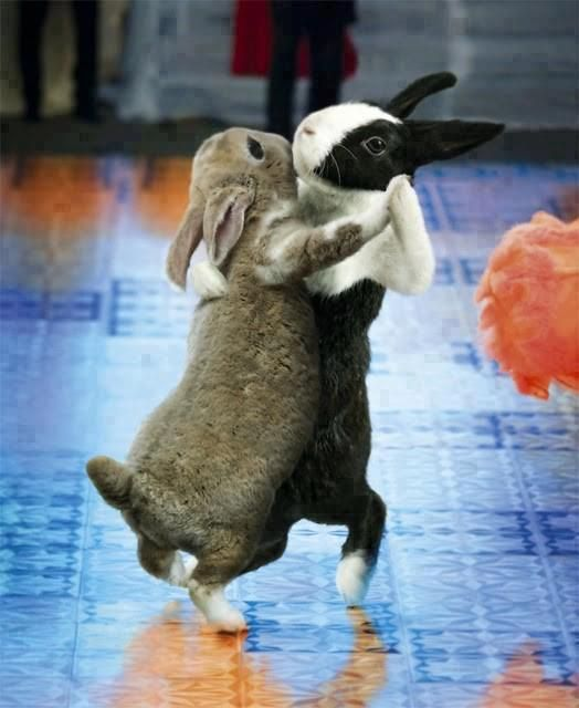 Dancing Babies Cute: Best 25+ Funny Baby Animals Ideas On Pinterest