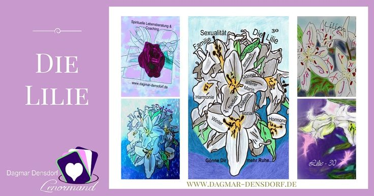 Lenormandkarte die Lilie