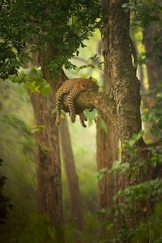 Snoozing in the jungle.