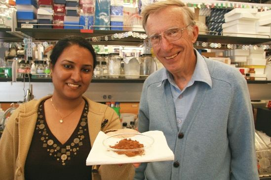UC Santa Barbara Scientists Discover Cinnamon Compounds' Potential Ability to Prevent Alzheimer's