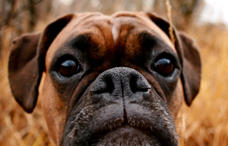 What will kill a dog first blocks its nose (2)