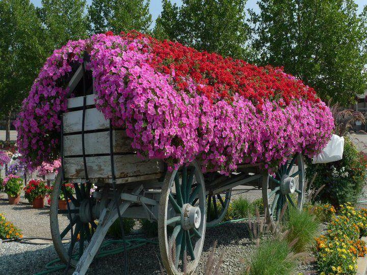 Flower garden / Цветочный сад. Обсуждение на LiveInternet - Российский Сервис Онлайн-Дневников
