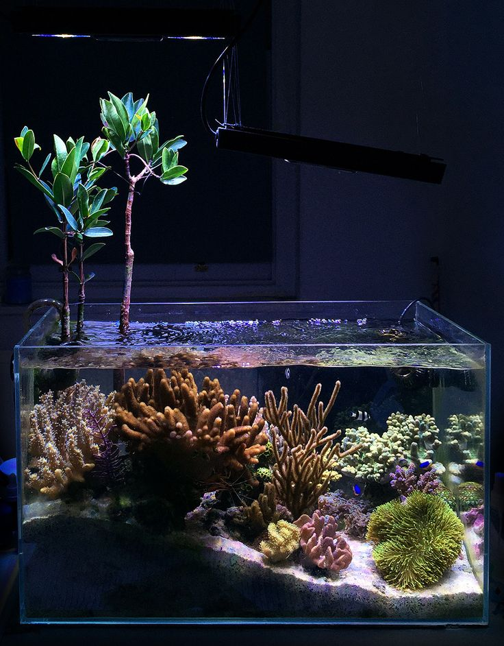 134 best images about tankspiration on pinterest for Aquarium recifal nano