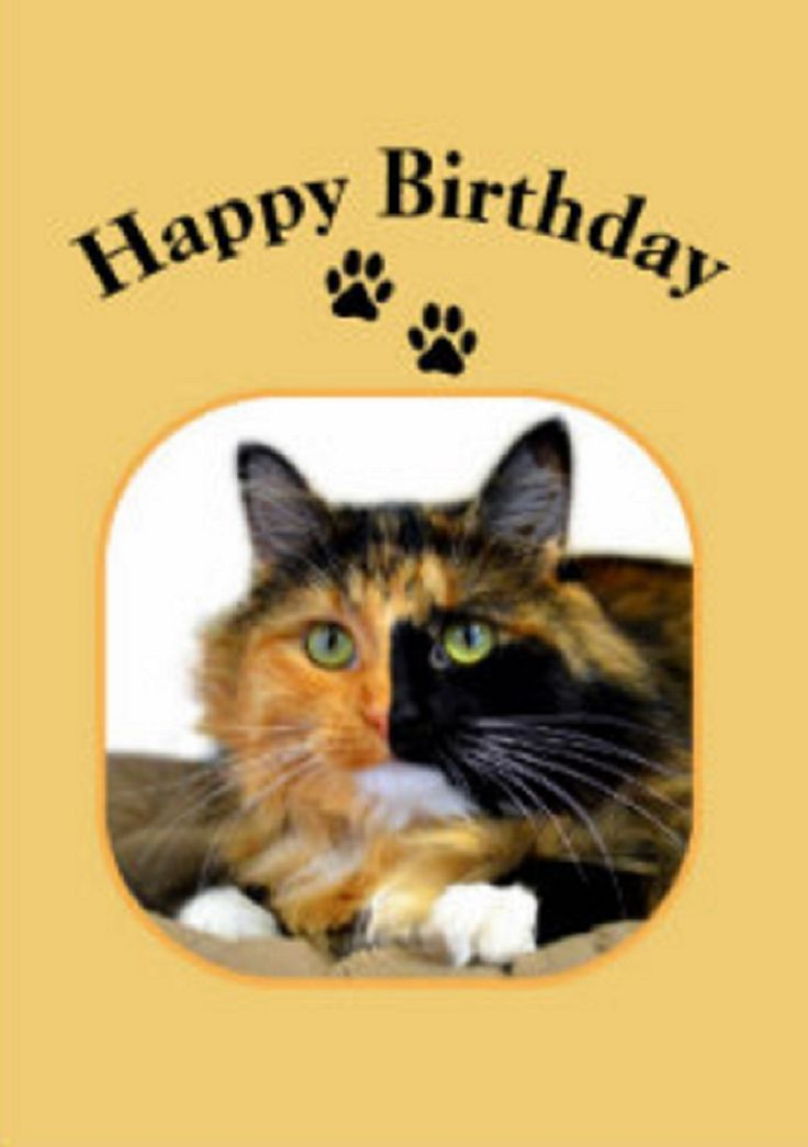 88 best Cat Birthday Cards images – Cat Birthday Greetings