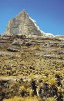 El bioma páramo está presente en las altas montañas tropicales por encima de los 3.000 msnm y tiene denominaciones regionales como páramos en Colombia, Venezuela, Costa Rica y Ecuador; jalca y puna en Perú; zacatonal en México; cinturón afroalpino en Áfri