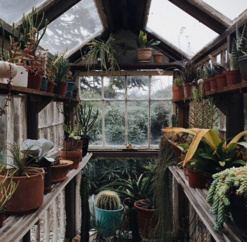 back yard greenhouse for fresh potion ingredients and herbalogy practices