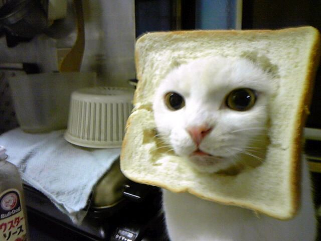 Image result for stupid cat