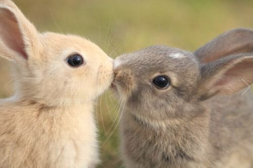 Bunny kisses! Aww
