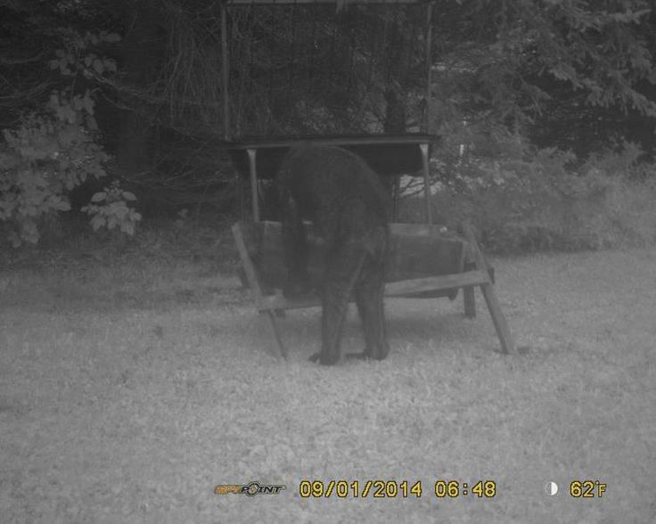 New Bigfoot picture from Pennsylvania?
