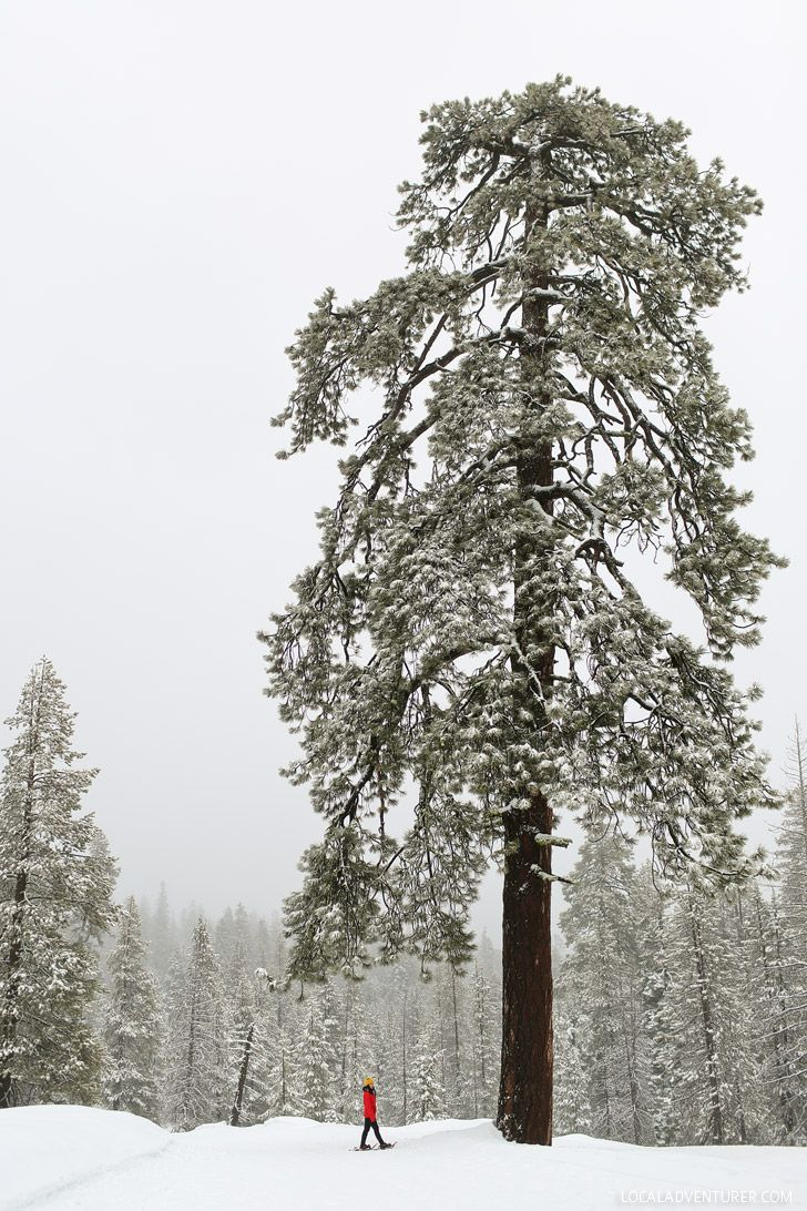 Yosemite National Park in California turns into a winter wonderland (15 Best National Parks to Visit in Winter) - Some to Avoid the Cold, Some for a Different Perspective of the Park, and Some for a Winter Wonderland // localadventurer.com