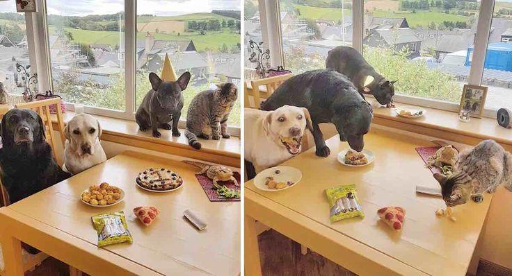 Parece que la fiesta estuvo buena.
