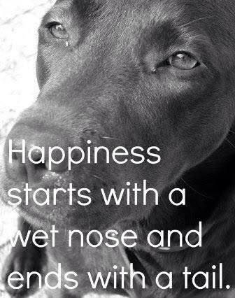that is true happiness