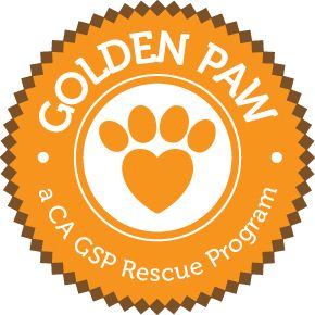 The CA GSP Rescue is pleased to announce the Golden Paw Program, helping to place wonderful senior dogs who are often overlooked, into loving forever homes.  Please take a moment to check it out!