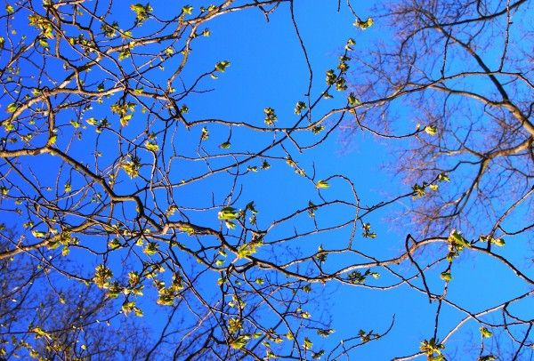 Spring - the perfect time to be outdoors and soak up those long-lost vitamin D's! Photo: Mia Halmén. #helsinki #park #spring #blossom #blueskies