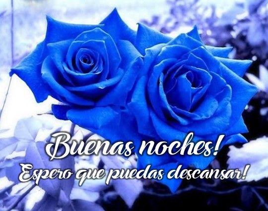Rosas azules con mensajes de buenas noches