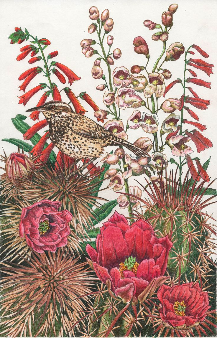 coloring books for adults wholesale 36 best images about adult coloring pages on pinterest