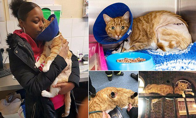 Cat returns home after being impaled on 8ft tall metal fence posts