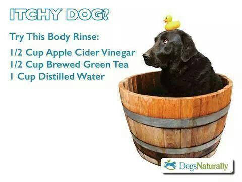 Can I Feed My Dog Apple Cider Vinegar