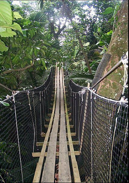 Pont suspendu au Parc des Mamelles