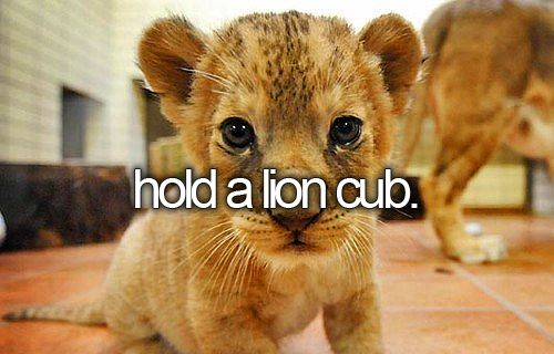More than hold!!!! I wanna OWN a lion cub!!!! I.... LOVE.... LIONS!!!!! : D