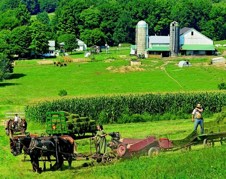 best amish images amish country people and  amish all family members help every aspect of the amish farm life