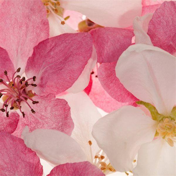 Apple blossom sur Au Fil des Couleurs