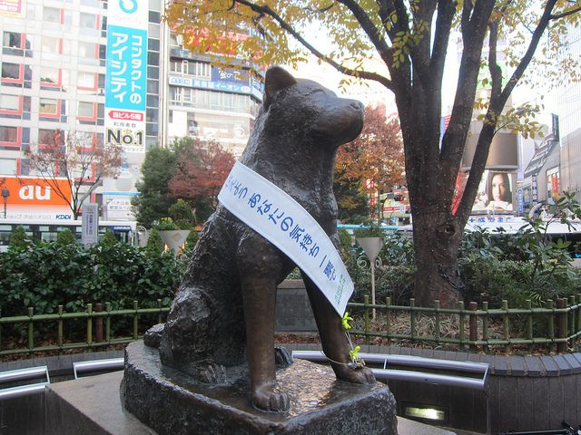 Rare Photo Surfaces Of Hachiko, The World's Most Loyal Dog - For the love of animals. Pass it on.