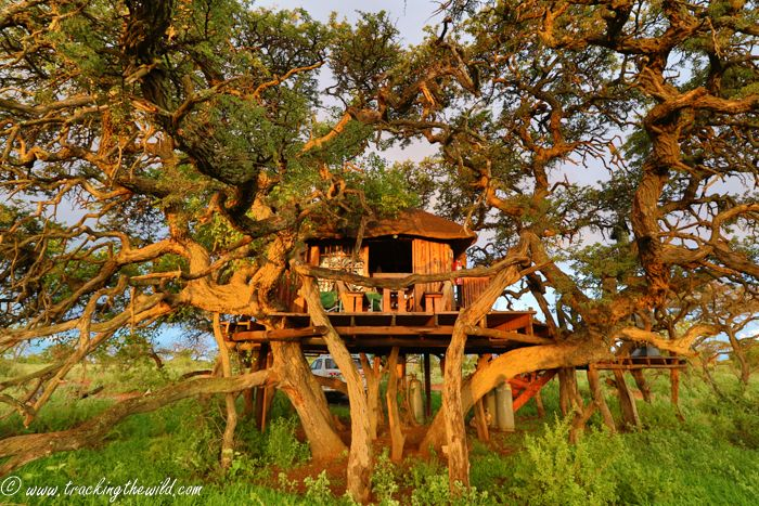 Tucked away in a quiet corner of the Northern Cape and just an hour's drive from Kimberley, lies Mokala National Park with beautiful scenery, the closest thing you will find to a quagga and a fantasy treehouse.