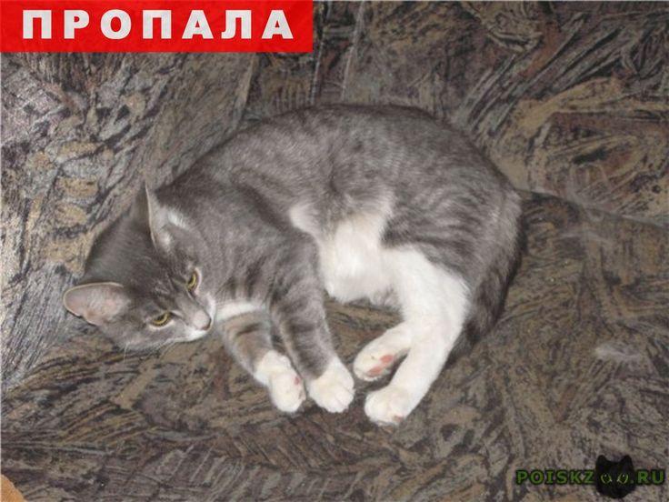 Пропала кошка г.Видное http://poiskzoo.ru/board/read31053.html  POISKZOO.RU/31053 Помогите, пожалуйста. сегодня возили кошку в ЮНИВЕТ и она сбежала в районе Радужный, пряталась под машинами у дома через дорогу. Мы пытались ее поймать, но она убежала в неизвестном направлении. Если уведите сообщите, пожалуйста, по телефону ... или ... Кошка отзывается на кличку Мурка. Кошку упустила я, моя мама даже плакала, помогите, пожалуйста.   РЕПОСТ! @POISKZOO2 #POISKZOO.RU #Пропала #кошка…