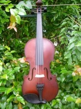 Our most affordable instrument instore: Arco Violin outfit - $237. Includes case, bow and rosin (all sizes)