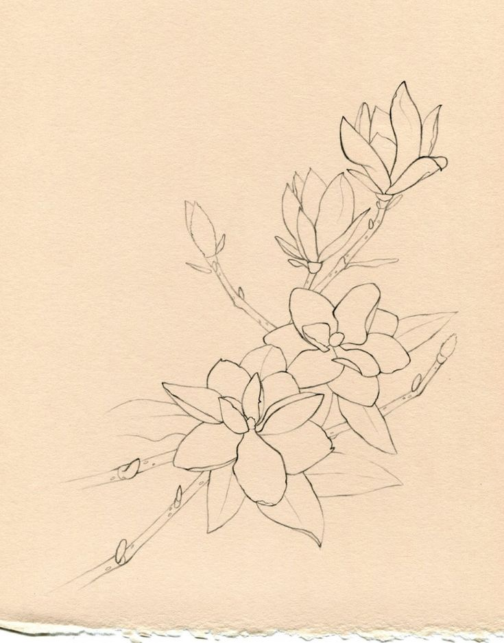 Moon magnolia ♡ http://tattoomagz.com/magnolia-flower-tattoo/june-rhymes-with-moon-magnolias/