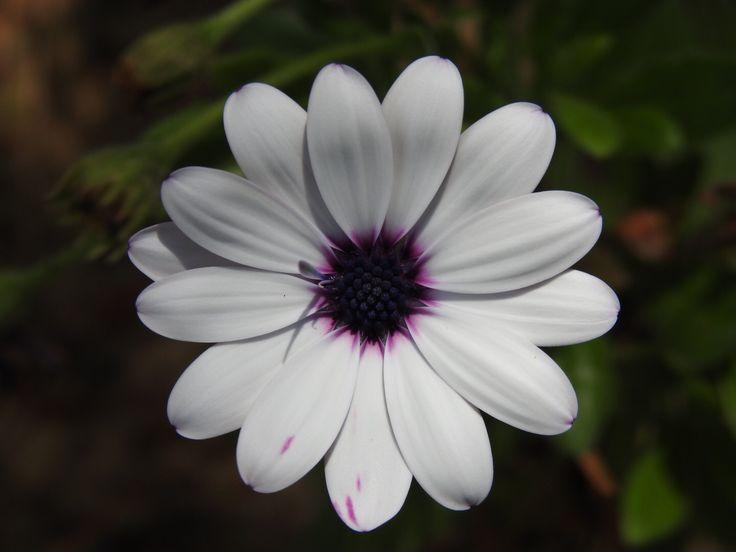 #flowerpower#miracle#natureisamazing#happydaymaker