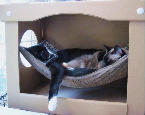 DIY this Cat Hammock... Might be a good gift for Grandma's kitties :)
