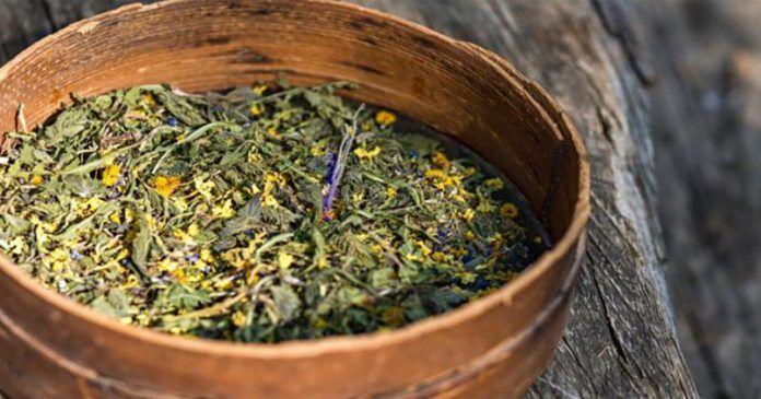 Здоровье в наших руках: Традиционный американский чай, который лечит рак (Рецепт внутри)!