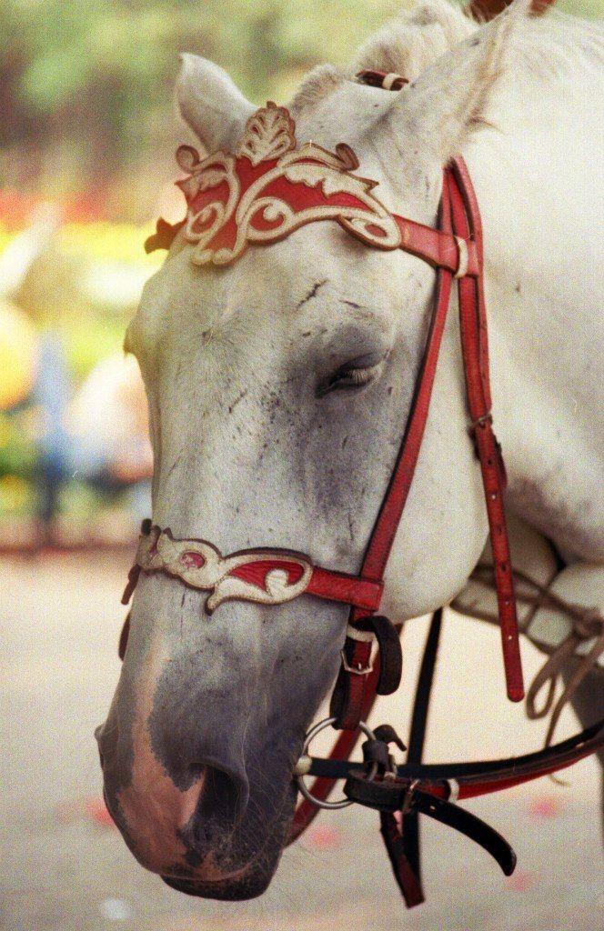 walk around the city, horse, лошадь, пленка, прогулки