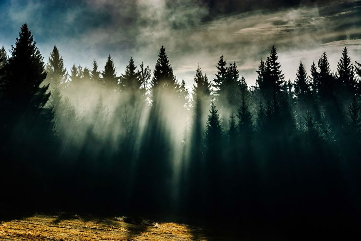 Dark forest by Mateusz Kuca on 500px