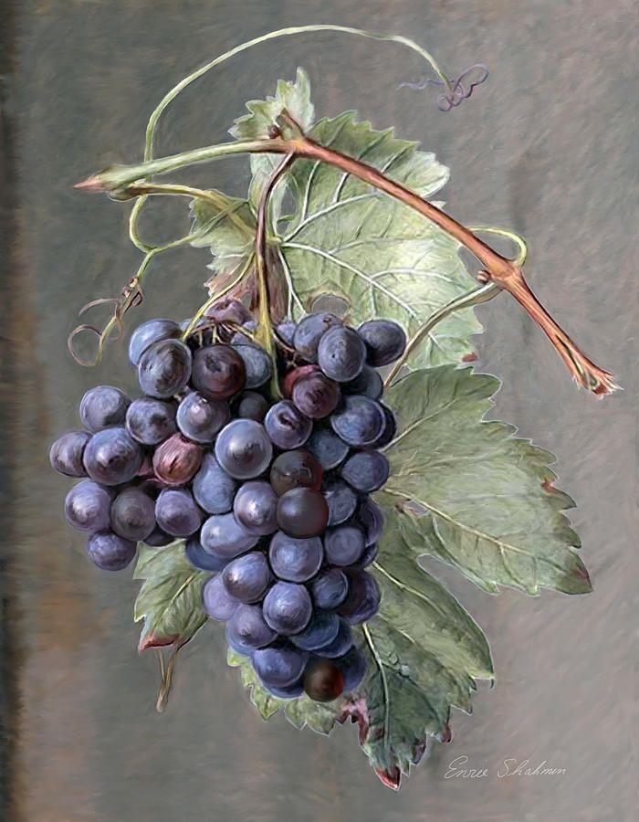 Живопись виноград - виноград Enzie Shahmiri