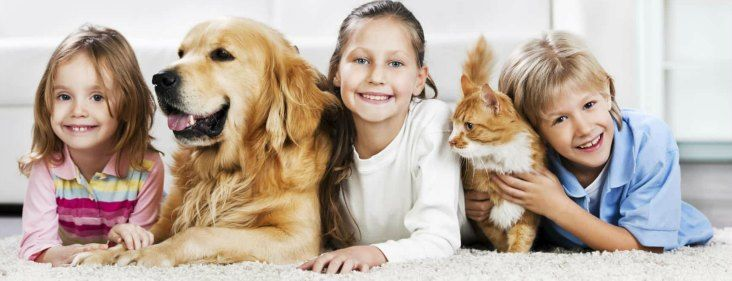 When you need pet carpet cleaning services, do you know what to look for? Here's a 10-point guide on how to choose the best.